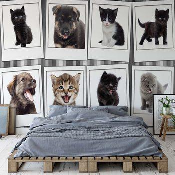 Puppies And Kittens Valokuvatapetti