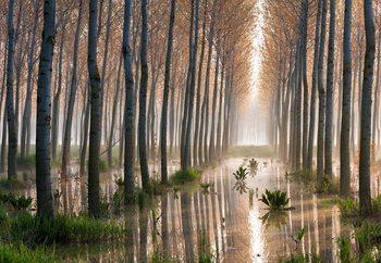 Rains Of Spring Valokuvatapetti