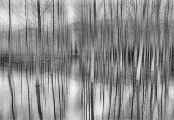 Reflections Valokuvatapetti
