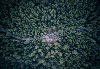 Road Through The Forest Valokuvatapetti