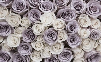 Roses Flowers Purple White Valokuvatapetti