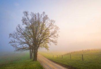 Silence Of Days Valokuvatapetti
