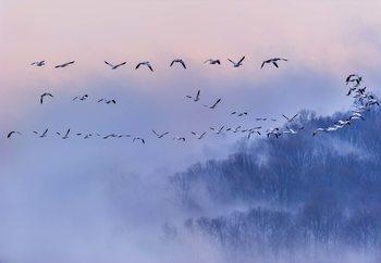Snow Geese Valokuvatapetti