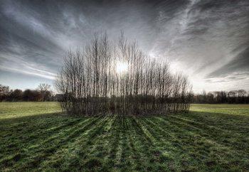 Sticky Trees Valokuvatapetti