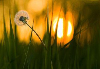 Sunbathing Valokuvatapetti