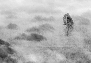Swamp's Tree Valokuvatapetti