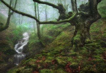 The Enchanted Forest Valokuvatapetti