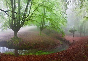 The Forest Maravillador Valokuvatapetti