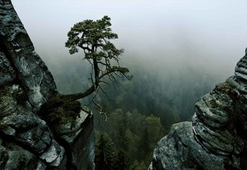 The Lonely Tree In The Cliff Valokuvatapetti