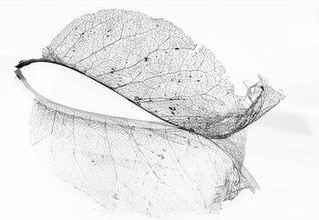 The Old Leaf Valokuvatapetti