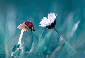 The Story Of The Lady Bug Valokuvatapetti