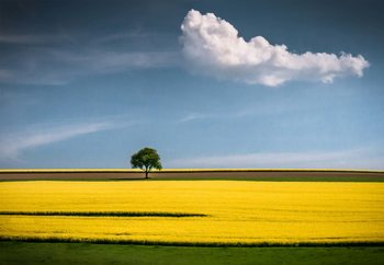 The Tree And The Cloud Valokuvatapetti
