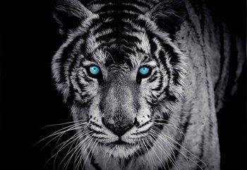 Tiger Animal Valokuvatapetti