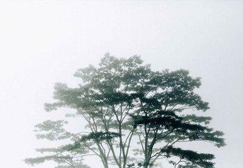 Timor-Leste Valokuvatapetti