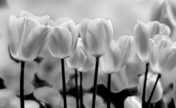Tulip Flowers Valokuvatapetti