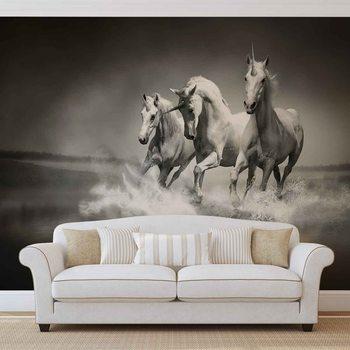 Unicorns Horses Black White Valokuvatapetti