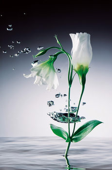WEI YING WU - crystal flowers Kuvatapetti, Tapettijuliste