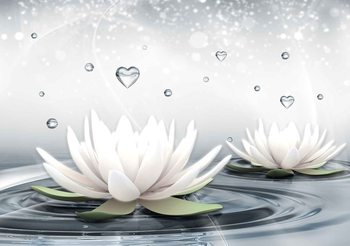 White Lotus Drops Hearts Water Valokuvatapetti