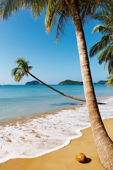 Lasitaulu Dream - Palm Beach