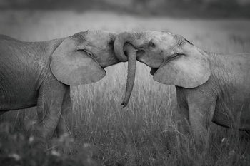 Lasitaulu Elephants - Love