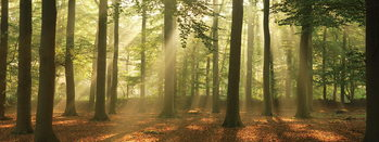 Lasitaulu Forest - Sunny Forest