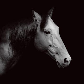 Lasitaulu Horse - Head b&w