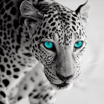 Lasitaulu Leopard b&w
