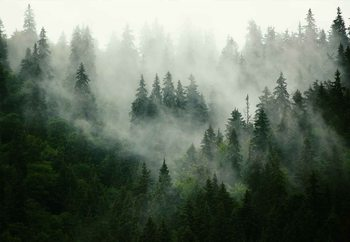 Lasitaulu Misty Forest