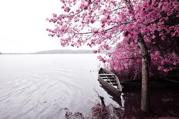 Lasitaulu Pink World - Blossom Tree with Boat 1