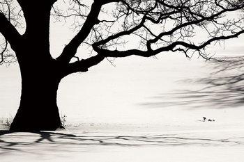 Lasitaulu Tree - Black and White