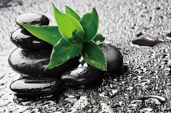 Lasitaulu  Zen - Green nature
