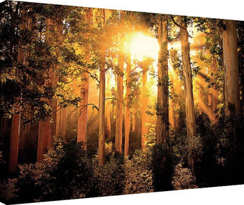 Mario Moreno - Enchanted Canvas Print