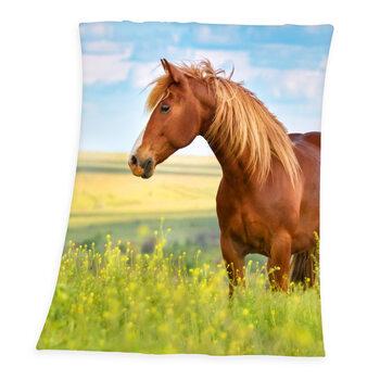 Blanket Horse