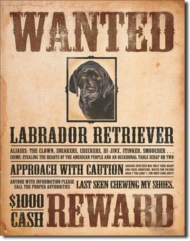 BLACK LABRADOR - wanted Metal Sign
