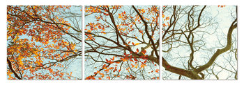 Autumn treetop Mounted Art Print
