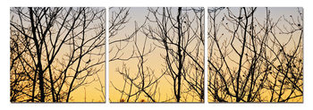 Bushes at sunrise Mounted Art Print