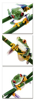 Colorful Frog Mounted Art Print