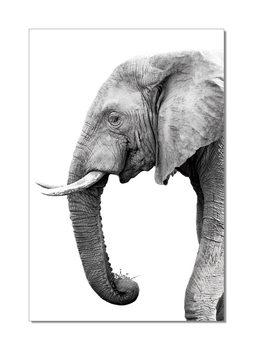 Elephant - African Elephant w&b Mounted Art Print