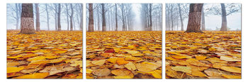 Ground covered with leaves Mounted Art Print