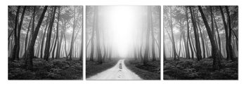 Mysterious forest Mounted Art Print
