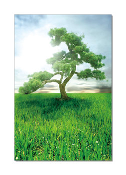 Pine Dream Mounted Art Print