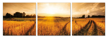 Sunshine above the field Mounted Art Print