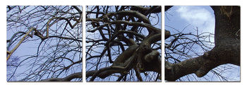 Tree branches Mounted Art Print