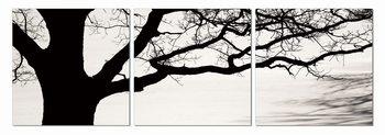 Tree in misty morning Mounted Art Print