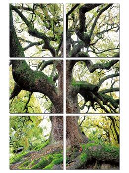 Tree of Life Mounted Art Print