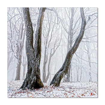 Trees Mounted Art Print