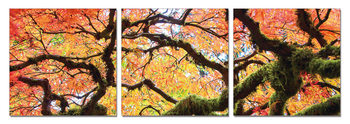 View of autumn tree's crown Mounted Art Print