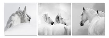 White horses Mounted Art Print