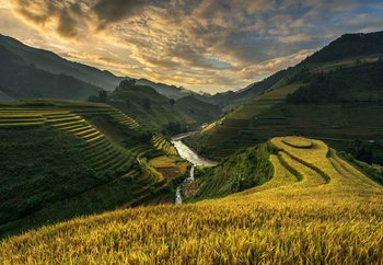 Murais de parede Rice Terrace In Vietnam