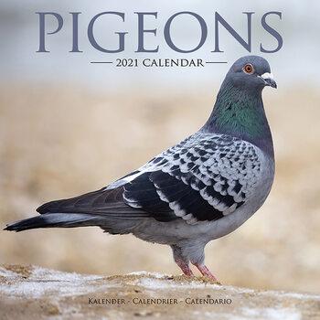 Calendar 2021 Pigeons
